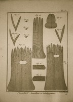 Glove Illustration